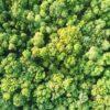 Recicla Tus Pilas Andalucía reafirma su compromiso con los ODS para frenar el Cambio Climático